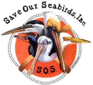 save our seabirds | elite family care