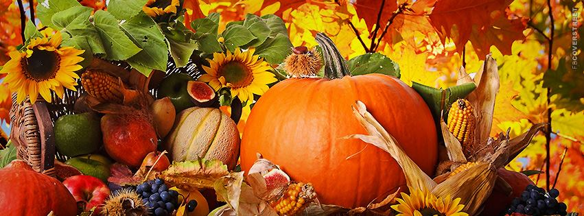 fall family activities sarasota| elite family care